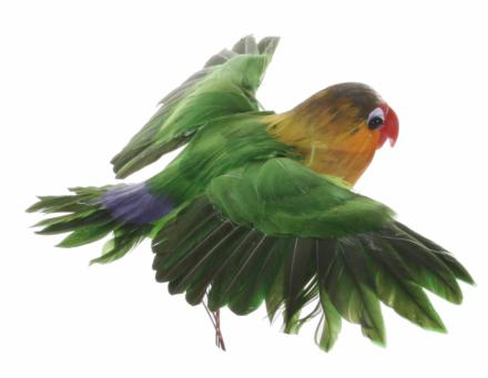 Parrot orange green - Shishi