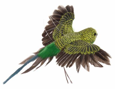 Parrot flying yellow green - Shishi